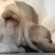 Los cuidados para un perro adulto mayor