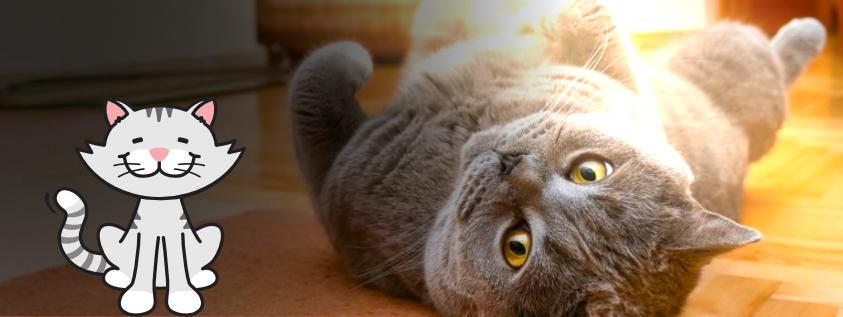 El ambiente ideal para tu gato