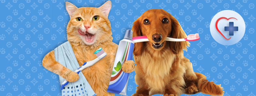 Cuidado dental de las mascotas